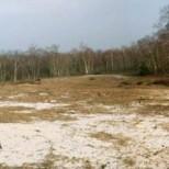 Vue de la dune éclaircie après la coupe ©O.G.E